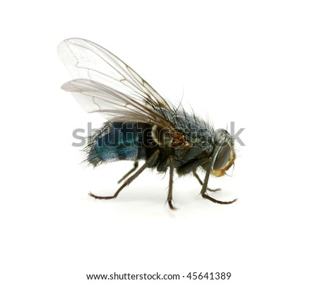 A macro  of  fly - stock photo