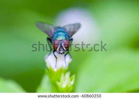 A macro of fly on flower