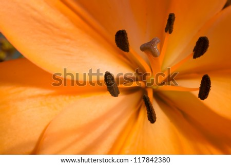 A macro photo of a yellow flower - stock photo