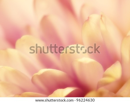 A macro photo of a yellow flower - nice as background - stock photo