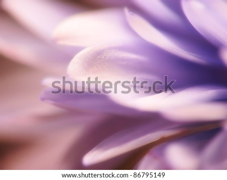 A macro photo of flower beauty (blurred) - stock photo