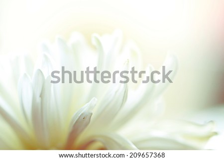 a macro photo of white flower,multicolor - stock photo