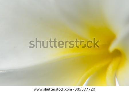 A macro photograph of a Frangipani flower - stock photo