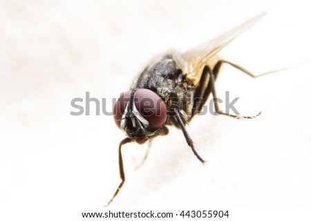 A macro photography fly close-up on black background. - stock photo