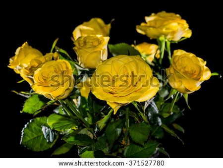 A macro shot of a bouquet of yellow roses. - stock photo