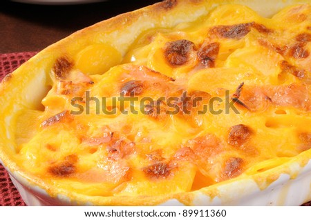 A macro shot of a casserole dish of au gratin potatoes with ham - stock photo