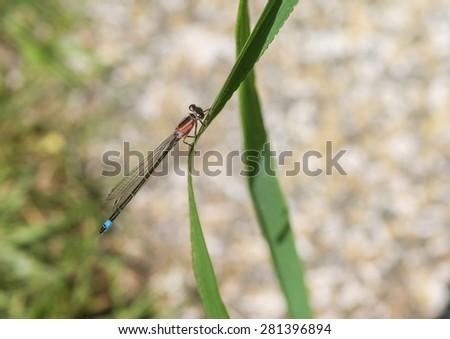 A macro shot of a damselfly sitting on a leaf. - stock photo