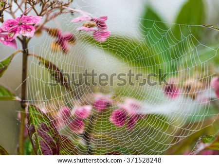 A macro shot of a dewdrop covered spider web. - stock photo
