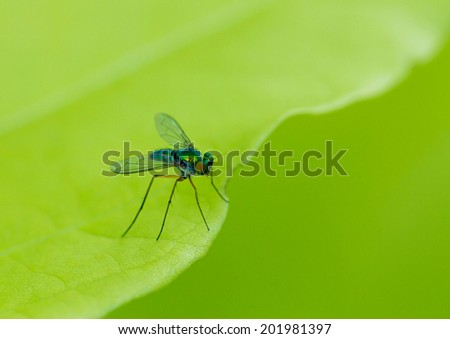 A macro shot of a fly sitting on a green leaf.