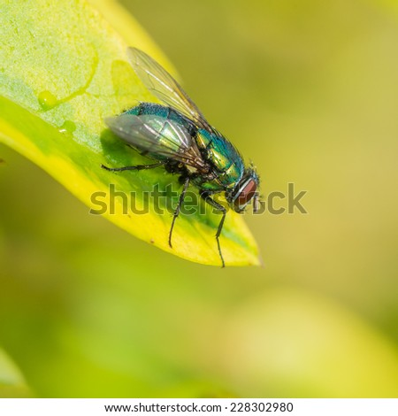 A macro shot of a fly sitting on a green leaf. - stock photo