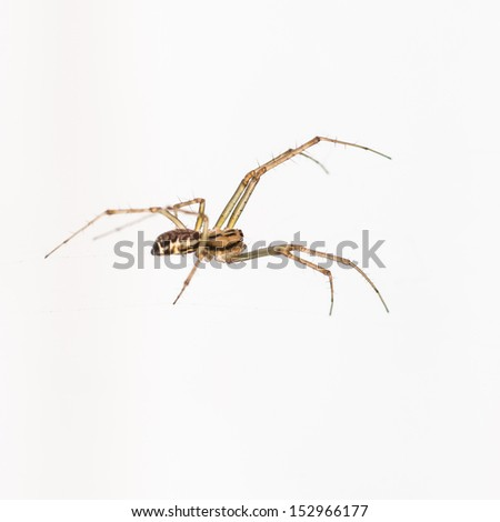 A macro shot of a spider shot against a white background.