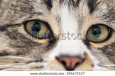 A macro shot of a young tabby cat's face