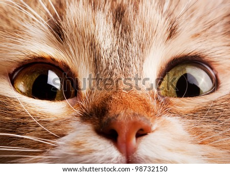 A macro shot of cat face - stock photo