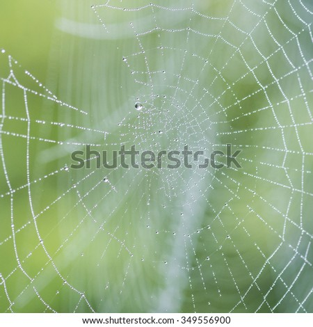 A macro shot of some raindrops caught in a garden spiders web. - stock photo