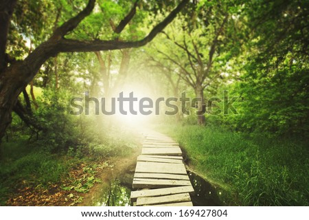 a magical bridge in a green lush forest - stock photo
