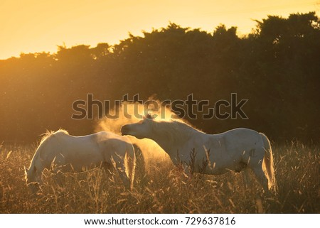 stock-photo-a-magical-scene-of-horses-in
