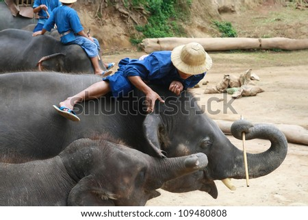 a mahout relaxed play with elephant, Chiang Mai, Thailand - stock photo