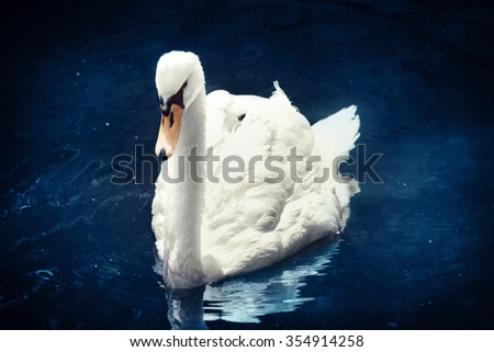 A majestic white swan floating on a mystical blue water - stock photo