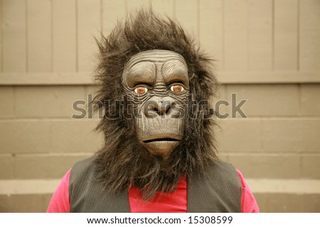 a male model wears a Gorilla Head Costume at the request of the photographer - stock photo