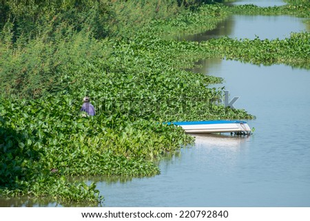 A man collecting water hyacinth on the small river in southeast of Vietnam - stock photo