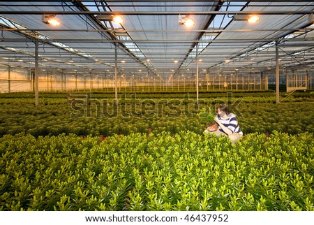 A man, crouching in between endless rows of potted plants inside a glasshouse - stock photo