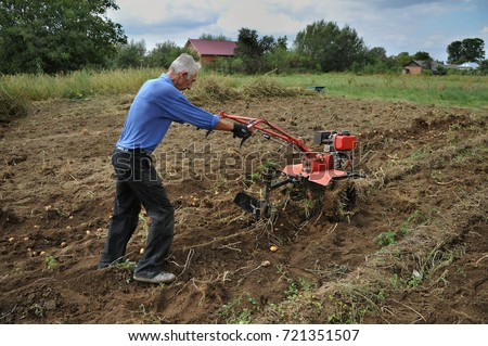 A man digging potatoes with using plow and tractor.