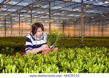 A man examining plants in a glasshouse - stock photo