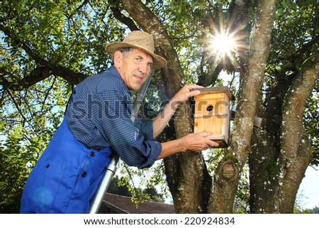 A Man hanging a Nest Box into a tree - stock photo