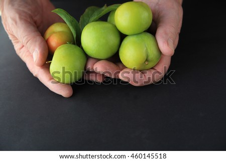 A man holding fresh green plums in both hands on a dark background.