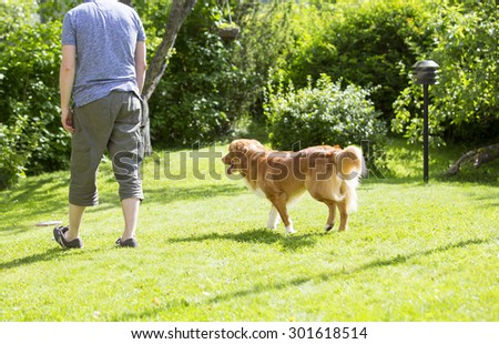 A man is teaching and training the dog outdoor in the park. The dog breed is nova scotia duck tolling retriever. The composition is so to emphasize the situation of teaching. - stock photo