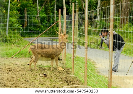 A man photographing Deer in zoo or wildlife park