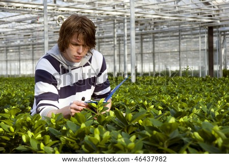 A man, surrounded by plants, checking the bulbs - stock photo