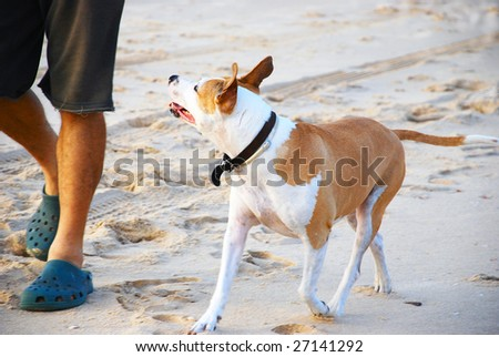 A man taking his dog for a walk - stock photo