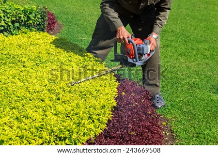 A man trimming shrub with Hedge Trimmer - stock photo