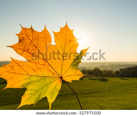 A maple leaf in the autumn landscape with cloudless sky - stock photo
