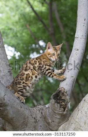 A marble cat walking outdoors - stock photo
