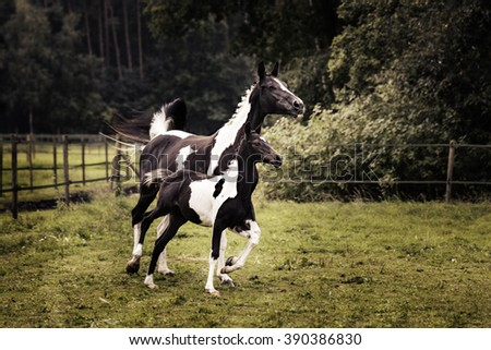 A mare and a foal trot in the grass. - stock photo