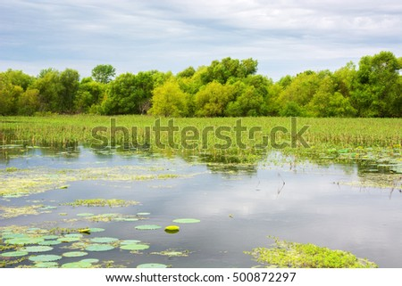 A marsh with aquatic plants and lily pads in Missouri.