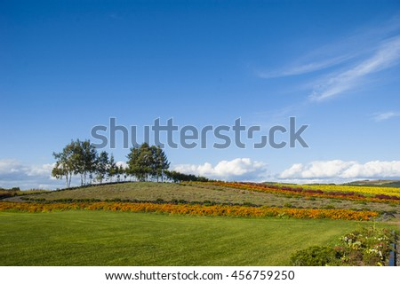 A meadow in front of a parterre and a small hill with trees - stock photo