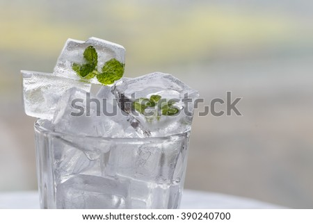 A mint leaf that is frozen in ice cubes.