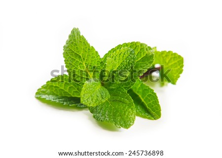 a mint leafs isolated on white - stock photo