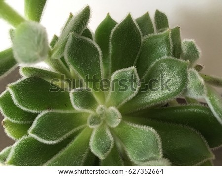 A miracle succulent green plant