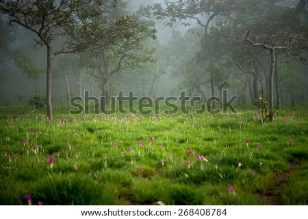 A misty forest im the morning with a beautiful pink flower - stock photo