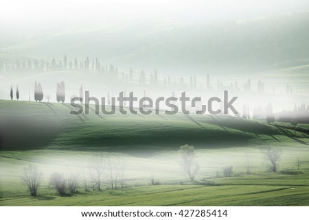 A misty landscape with cypress tress in Tuscany.