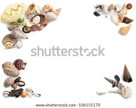 A mix of seashells on a white background. - stock photo