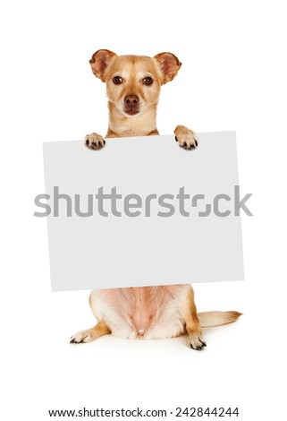 A mixed breed Chihuahua dog sitting up and holding a blank sign to enter your marketing text onto - stock photo