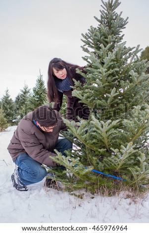 Cutting Down Christmas Tree Stock snímky, snímky pro členy zdarma ...
