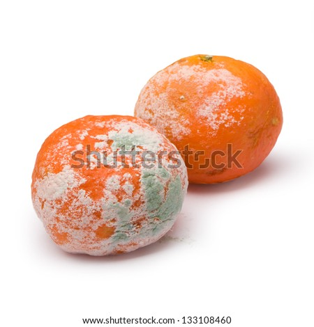 a moldy orange isolated on a white background - stock photo