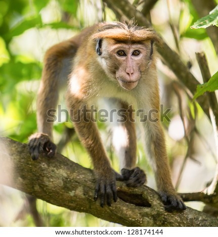 A monkey crouched in a tree - stock photo