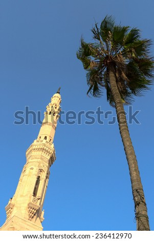 A mosque and palm in Alexandria, Egypt - stock photo